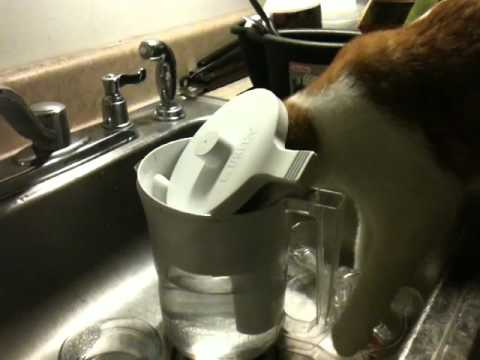Funny Cat Harry Steals Brita Filter