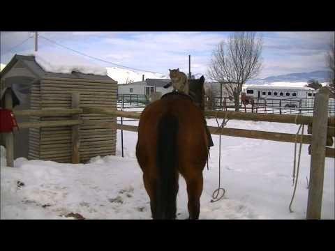 Funny Cat Jumping on Barrel Horses – Poco Pony's new jockey 2013