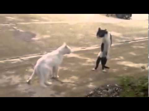 My Edited VidFunny Animal Videos, funny cats, funny cat videos ★ Compilation 2014 ★ eo