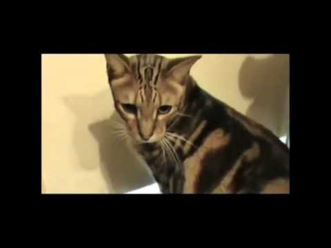 Funny Cats Videos Compilation   Funny Cat Videos1] | Funny Cat Videos Compilation