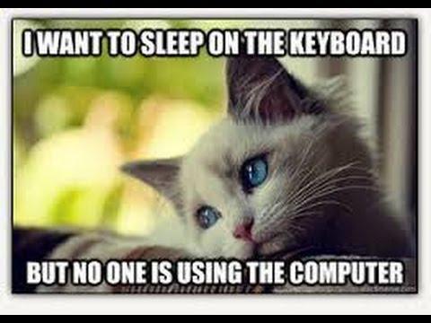 Funny Cat Memes 2 | 2014 | Animal Memes