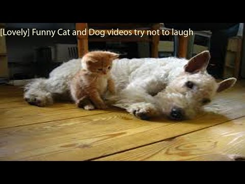[HOT] Funny Cat and Dog videos try not to laugh Funny video Funny Cat 2015