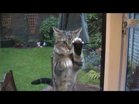 Funny Cat Cleaning window
