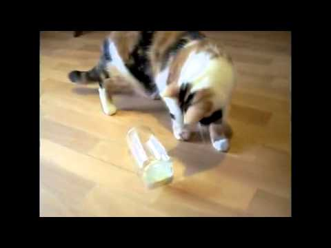 Funny cats video 2013   new   crazy   cute Kitten