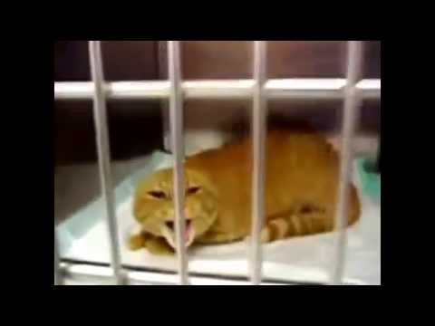 Funny Cats Compilation ~ Funny Cat Puns ~ Funniest Cat Jokes