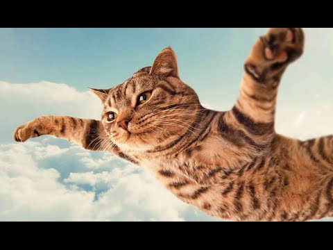 Super Cat Flying | Video Funny Cat HD