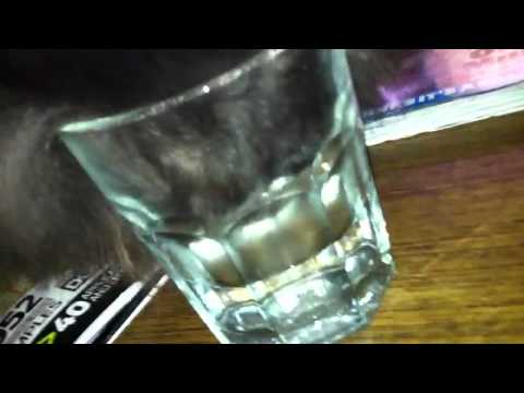 Funny cat drinking water with head in glass