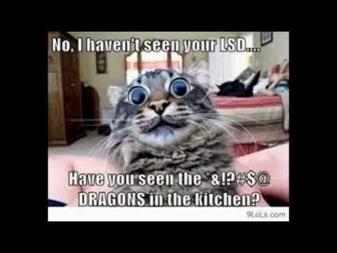 Cat memes- Funny