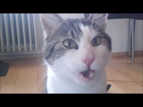 Süßer kleiner Kater flehmt! Funny Cat Video