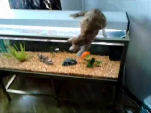 funny cat fishing