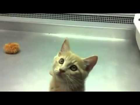 Funny cat confused