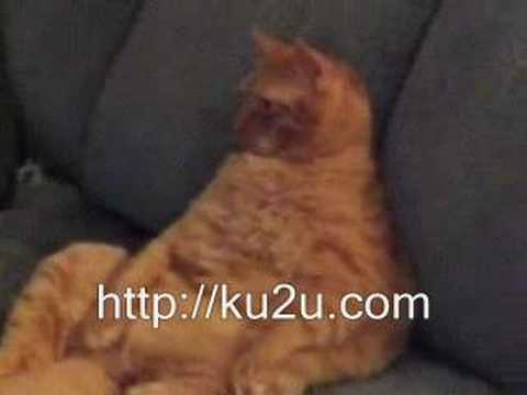 Funny with lazy cat and too fat cat