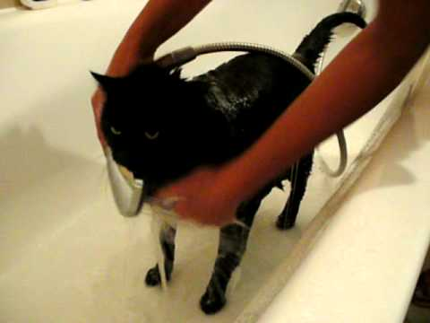 "Funny Cats: Cat ""Mephisto"" loves taking a shower…just cute :-)"