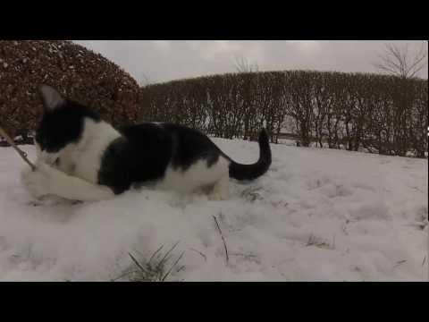 Worlds Most Weird, Hilarious, Funny Cat Video – HD 1080p