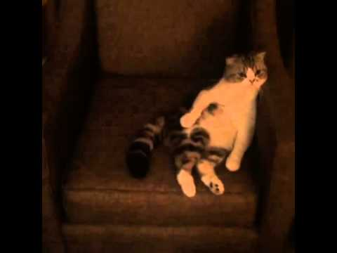 Taylor Swift's Funny cat