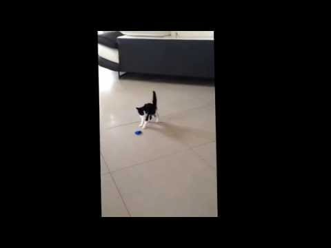 Funny little cat crab walking style